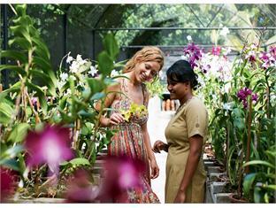 diva resort spa resort maldives - garden