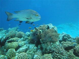 anantara kihavah villas maldives resort - sea restaurant