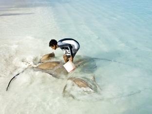 banyan tree vabbinfaru resort maldives - sting ray feeding