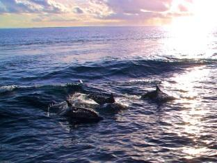 kurumba resort maldives alqasr - dophincruises