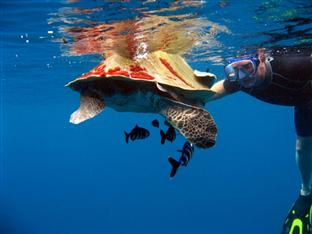 olhuveli beach spa resort maldives - dining