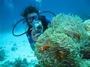 olhuveli beach spa resort maldives - diving